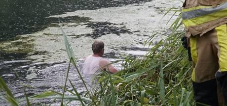 Ree belandt in kanaal, omstander duikt het water in om te zoeken