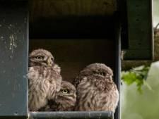 Willem Binnendijk stuit soms thuis op een verrassing. 'Dan staat er bij toeval iets op een foto dat ik bij het maken niet zag, maar toch de moeite waard is.'