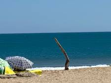 Kunstenaar Ruurd Hallema ziet een been van wrakhout in Frankrijk