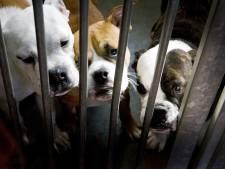 Honden en katten krijgen stress van windmolens, vreest asiel: 'Ernstige zorgen over het welzijn van de dieren'