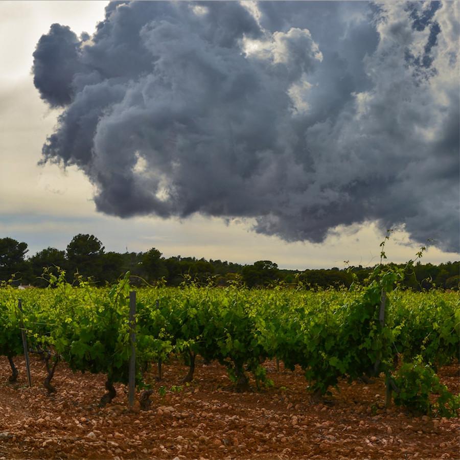 Noodweer in Valencia heeft ook effect op de nieuwe oogst voor de wijnen van Neleman uit Zutphen. Hun wijngaard daar is wel getroffen, maar hoe groot des chade is, is nu nog niet te zeggen.