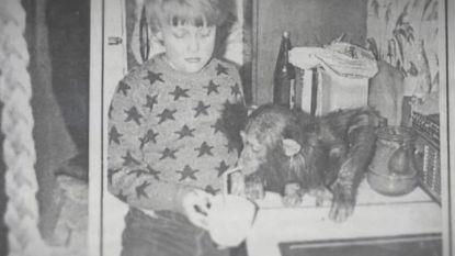 """Chimpansee Judy uit Antwerpse Zoo werd opgevoed als mensenkind: """"Ze dronk chocomelk en ging naar het toilet"""""""