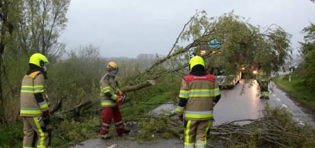 Brandweer Ubbergen vroeg uit de veren voor omgewaaide boom in Erlecom