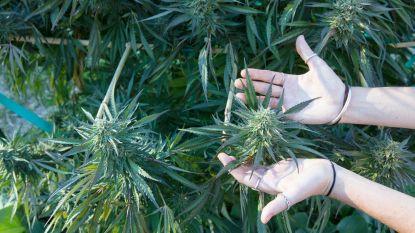 Veertiger riskeert 40 maanden cel voor cannabisplantage in huurhuis
