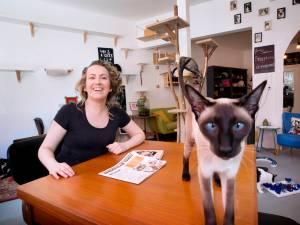 Ook de katten van het kattencafé in Breda kruipen uit de lockdown