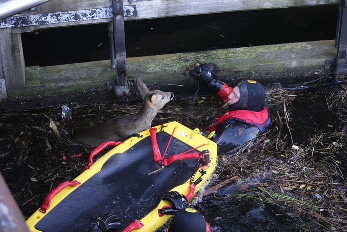 Veel hulpdiensten zetten zich in om het dier te redden.