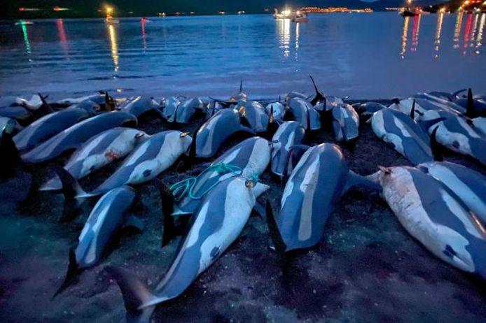 De regering wil zich opnieuw buigen over de jachtpraktijk op dolfijnen.