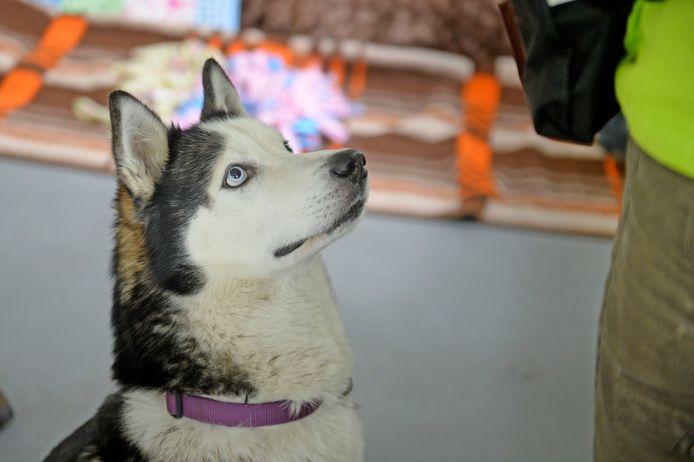 Een van de honden die is opgevangen bij 't Noordbroek en inmiddels een nieuw baasje heeft.