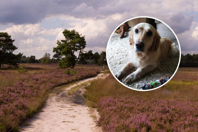 Hond Bella vond een vermiste vrouw op de Veluwse hei.