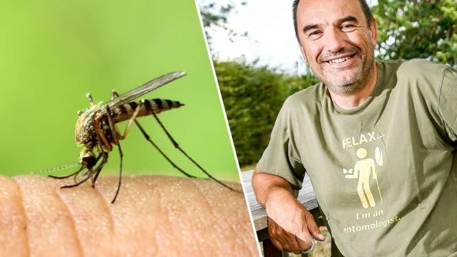 Zijn er dit jaar meer muggen? En hoe kan u ze in uw tuin vermijden?