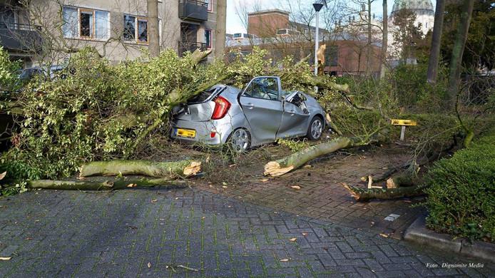 Eén boom verpletterde in de nacht van zaterdag op zondag in de Lollestraat twee auto's en beschadigde twee andere.