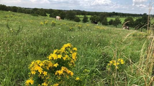 Op de Vlagheide grazen koeien en schapen en heeft de ongerepte natuur volop de kans om zich van haar mooiste kant te laten zien.