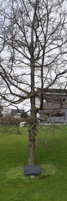 Bijzondere bomen, al dan niet in de grond