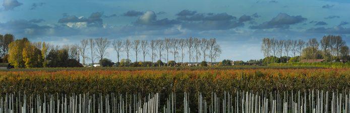 Bos op zijn Zeeuws: de Boomdijk bij Nieuw en Sint Joosland