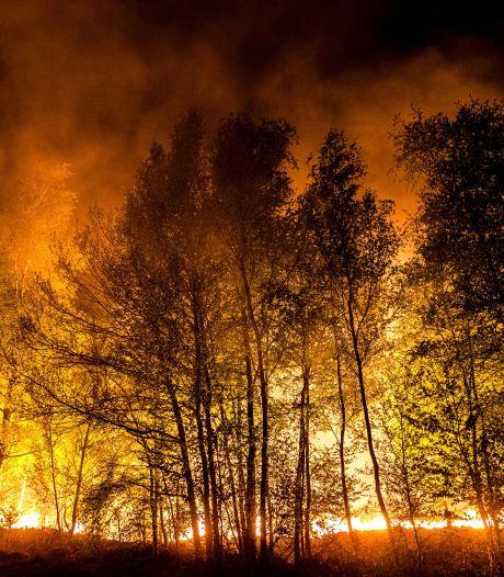 Gortdroog en veel wind: verhoogd risico op nieuwe natuurbranden in Brabant