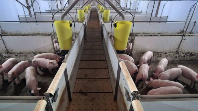 Varkensboeren Arie en Gert van Dam: 'Vlees is goed voor het klimaat'