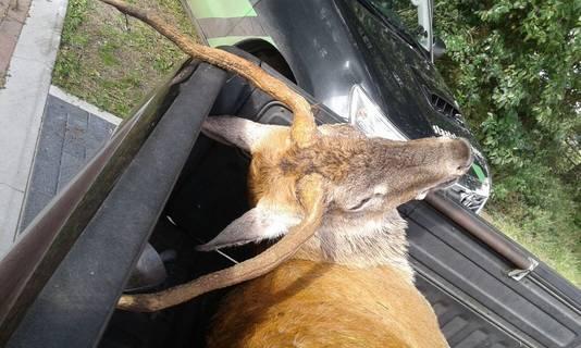 Teun verkeerde volgens de boswachter in goede conditie, had een goed gevulde maag en was ook 'op gewicht'.