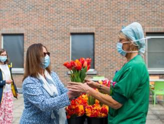 Zeg het met een boeketje: polderdistrict schenkt 13.000 tulpen aan Antwerpse ziekenhuizen