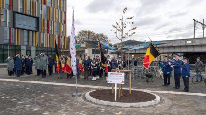 """Vredesboom staat voor nieuw stadhuis: """"Wanneer restauratie Vredestapijt op Grote Markt?"""""""