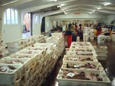 Doek definitief gevallen voor vismijn Breskens, gemeente Sluis verliest cruciale rechtszaak