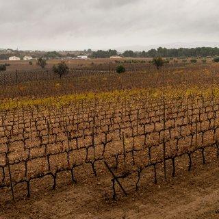 spaanse-wijnbouw-kreunt-onder-droge-hete-zomers