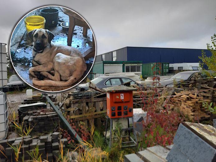 Het verwaarloosde terrein aan De Regge in Dronten was de plek waar negen honden onder erbarmelijke omstandigheden leefden tot hun bevrijding door de Dierenbescherming.