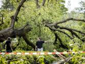 Leersum ontzet na storm die doet denken aan tornado: 'Alles ging plat'