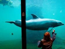 Partij voor de Dieren vraagt kabinet om stokje te steken voor verkoop dolfijnen aan China