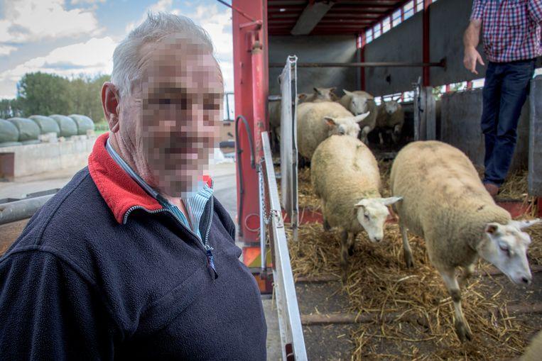 Het slachthuis in Kortenaken verwerkt voornamelijk schapen.