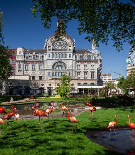 Flamingo's van de ZOO mogen na vijf maanden weer buiten