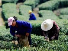 Groene thee drinken zorgt voor lager gewicht
