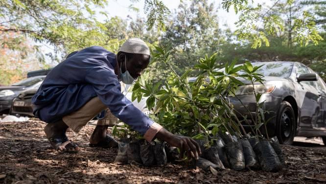 Ghana plant miljoenen bomen op één dag om ontbossing tegen te gaan