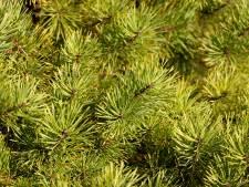 Kiwanis Club Almelo verkoopt voor 9.000 euro aan kerstbomen voor het goede doel