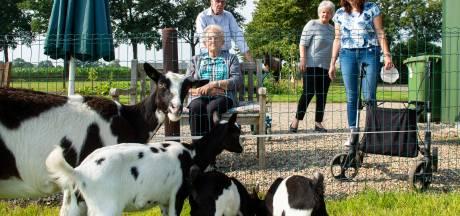 Dagbesteding voor ouderen in Klarenbeek: 'Wat ik hier doe? Aardappelen schillen!'