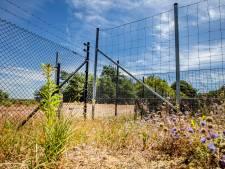 Hoge Veluwe weert wolf met metershoge hekken: Nederland is ongeschikt voor dat dier