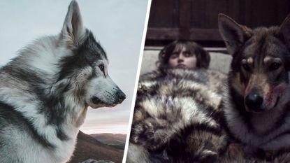 Hond achter 'direwolf' Summer uit 'Game of Thrones' overleden