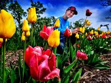 Pech voor bloemenliefhebbers: Plukhoek moet gesloten blijven