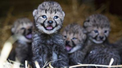 Drie Dendergemeenten gebuisd voor dierenwelzijn