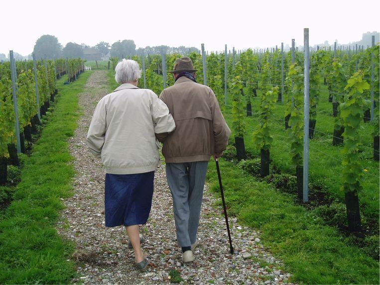 De wijngaard heeft ook een zorgfunctie: 40 senioren komen vier keer per week voor hun dagbesteding naar het landgoed in Amstelveen. Veelal mensen met ziektes als alzheimer en parkinson. Beeld De Amsteltuin
