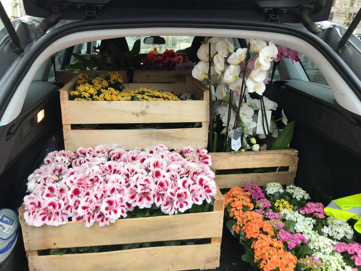 Tuincentrum schenkt elke bewoner Huize Proventier een bloem.