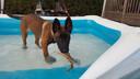 Bouke in het opblaaszwembad tijdens de tropische hitte van vorige week.