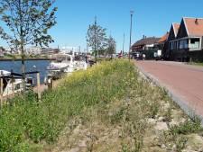 Onkruid smet op vernieuwde boulevard Harderwijk