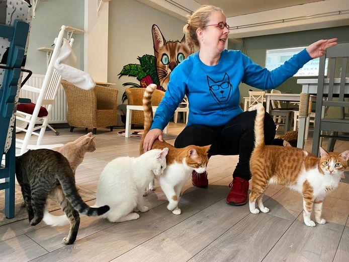 """De inwoners komen uit Griekenland. ,,Geadopteerd via een Nederlandse organisatie die op Kreta katten opvangt"""", vertelt Yvette Kouwenberg."""