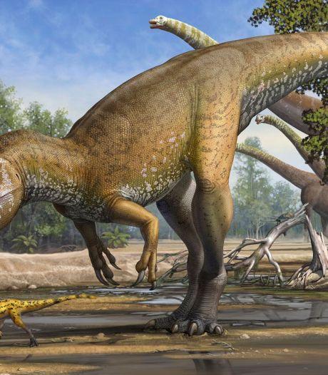 Nederlander vindt fossiel van grootste vleesetende dino