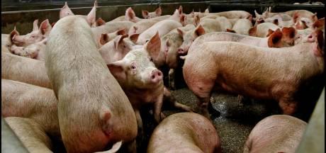 CNV: Inkrimping veestapel kan 30.000 banen kosten