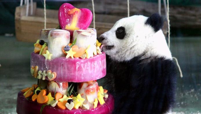 Un Bébé Panda Gâté Pour Son 1er Anniversaire Ecologie 7sur7be