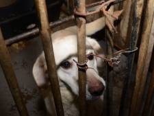 Omstreden hondenfokker uit Lettele stapt uit bestuur hippische sport