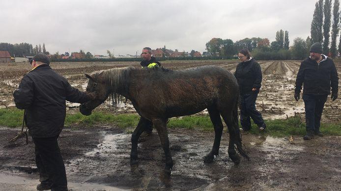 Het paard wordt naar haar trailer gebracht door de eigenaar.