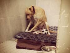 Trieste hond Lana vindt nieuw pleeggezin