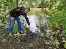 Eerste bever van Tilburg duikt in het Leijpark op: 'Fantastisch nieuws'